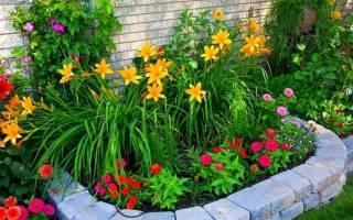 Размещение растений на дачном участке