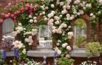 Где лучше посадить плетистую розу на даче?
