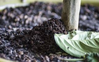 Спитый кофе как удобрение на даче
