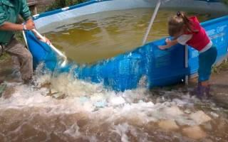 Куда сливать воду из бассейна на даче?