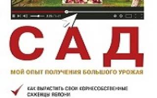 Выращивание клубники в Сибири в открытом грунте