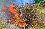 Сжигание листьев закон Россия