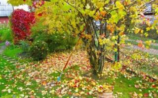 Что делать с дубовыми листьями на даче?