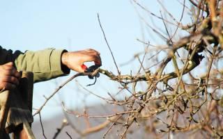 Осенняя обрезка яблонь в Сибири
