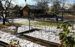 Что можно высаживать под зиму на даче?
