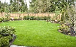 Когда сажать газонную траву на даче?