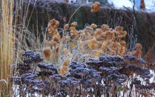 Как укрыть цветы на зиму на даче?
