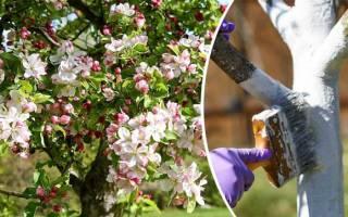 Как ухаживать за яблонями на даче?