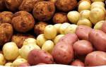 Как вырастить крупный картофель на даче?