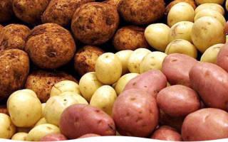 Как вырастить хороший картофель на даче?