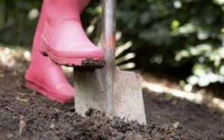 Когда лучше перекапывать землю на даче?