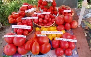 Ультраскороспелые сорта томатов для Сибири