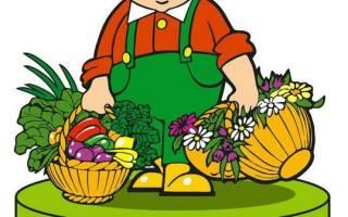 Лучшие производители семян в России рейтинг