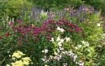 Цветы на дачном участке для ленивых