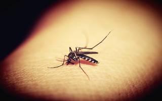 Опасные жуки в России