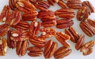 Орех пекан выращивание в России